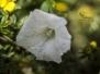 Bloemen in Twijzel 04-08-2017