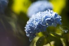 IMG_4338_bloem_met_prisma